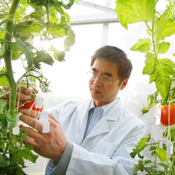 "Scientists unlock potential to yield ""diet"" fruit"