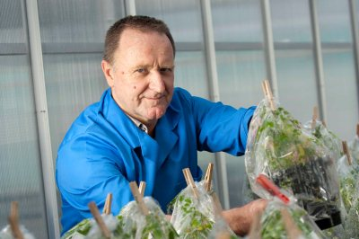 Professor Chris Grof with one of his crops