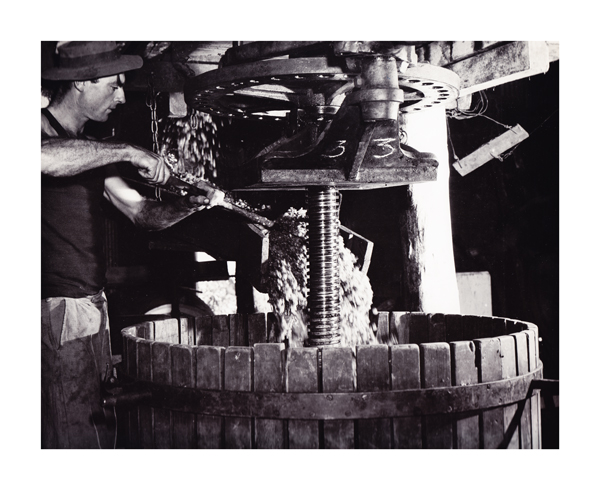 Max Dupain Grapes pouring into the press, Mount Pleasant winery, 1950, Courtesy the National Library of Australia