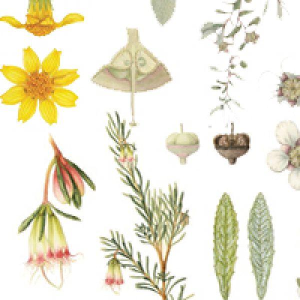 Botanical Beauties of the Hunter