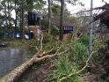 Tree down at Shortland Building