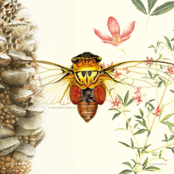 Drawing Nature, Science and Culture: Natural History Illustration 101 online course