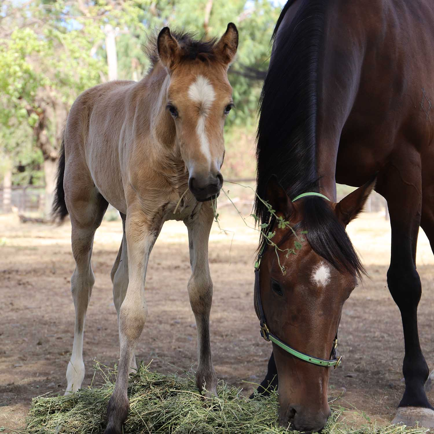 Tinsel the foal
