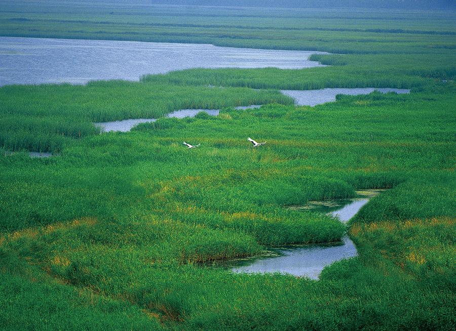 Zhalong Wetland