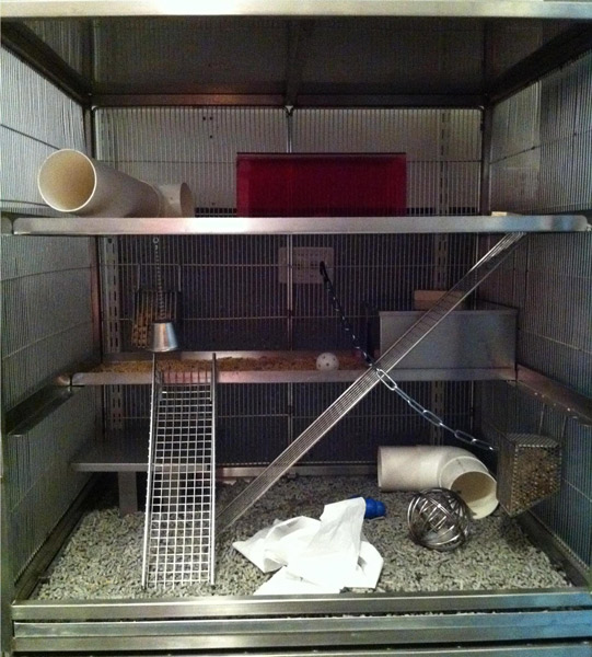 ENVIRONMENTALLY ENRICHED RAT CAGE.