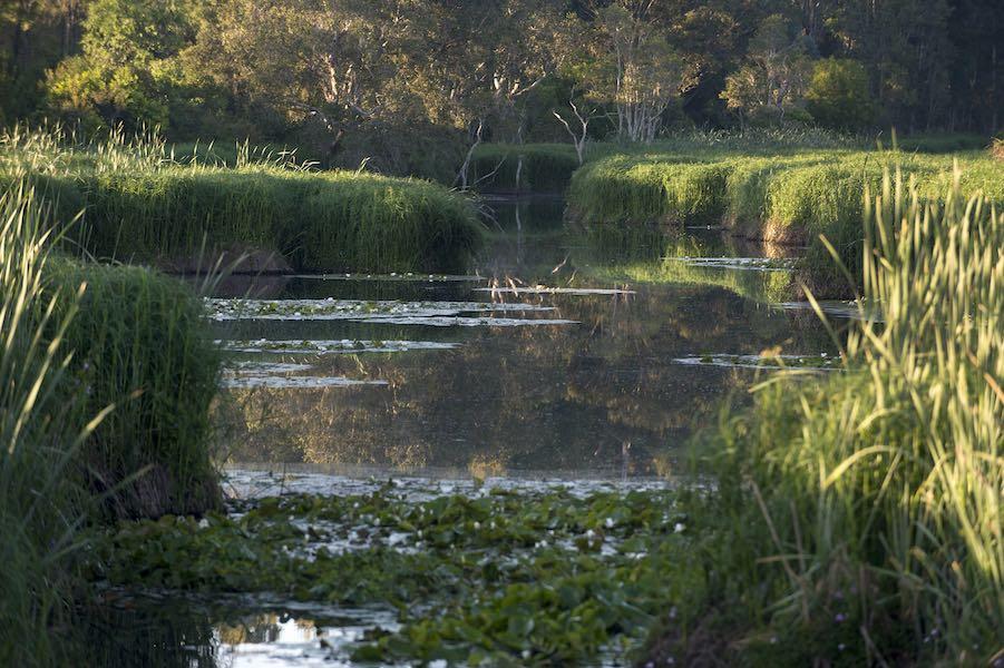 Hunter Wetlands