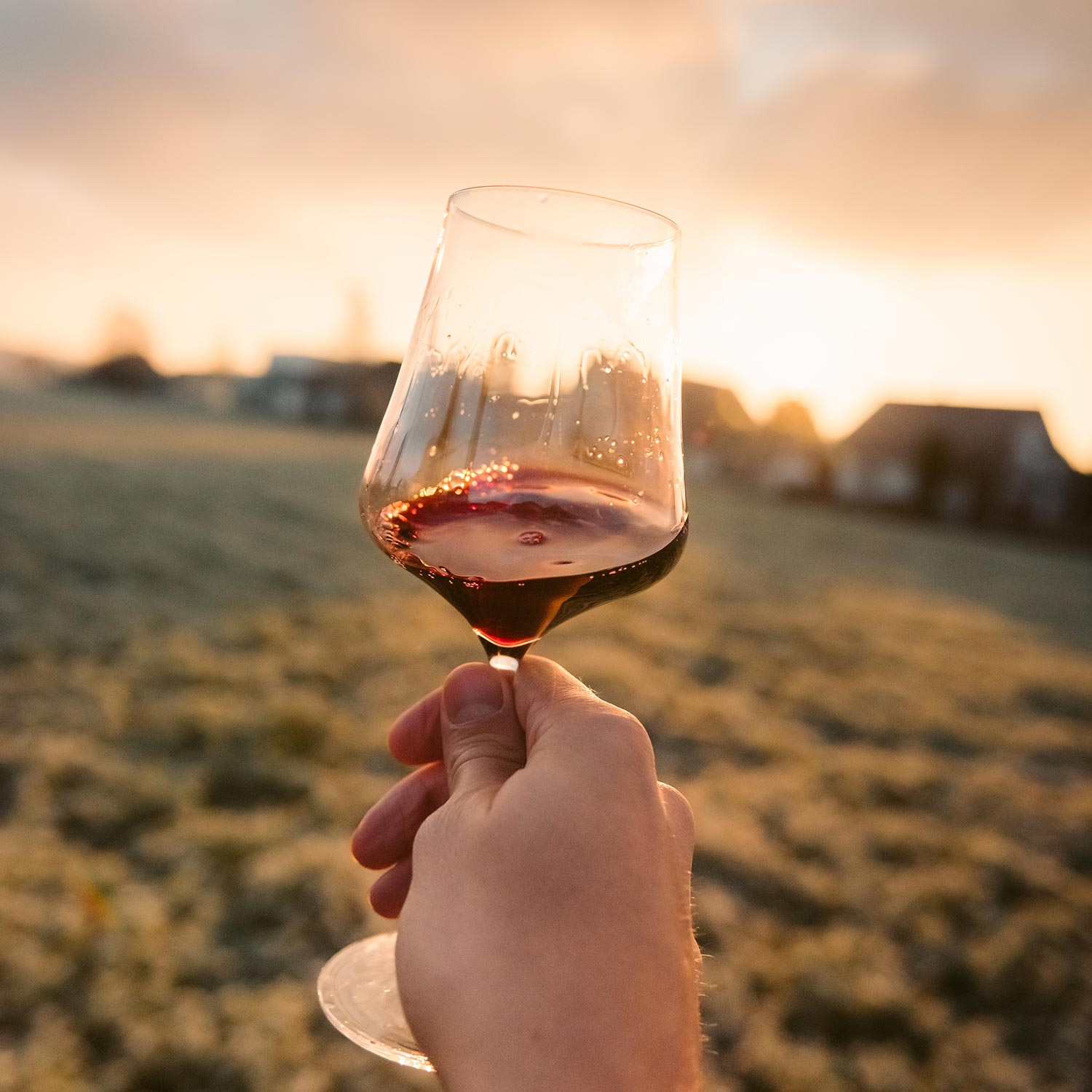 glass of wine held up against the sun