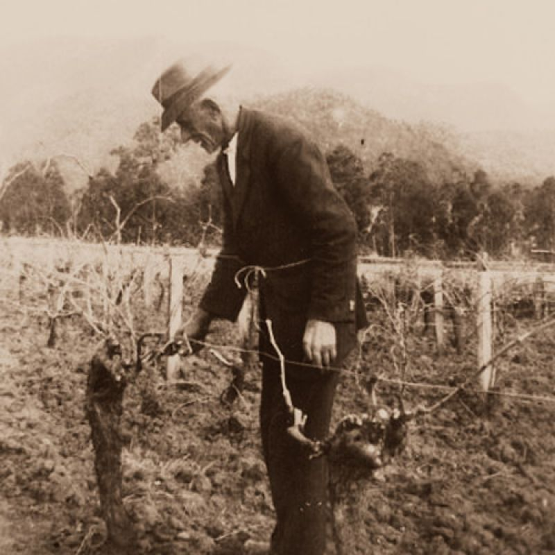 Dan Tyrell, second generation Hunter wine grower, working in the vineyard