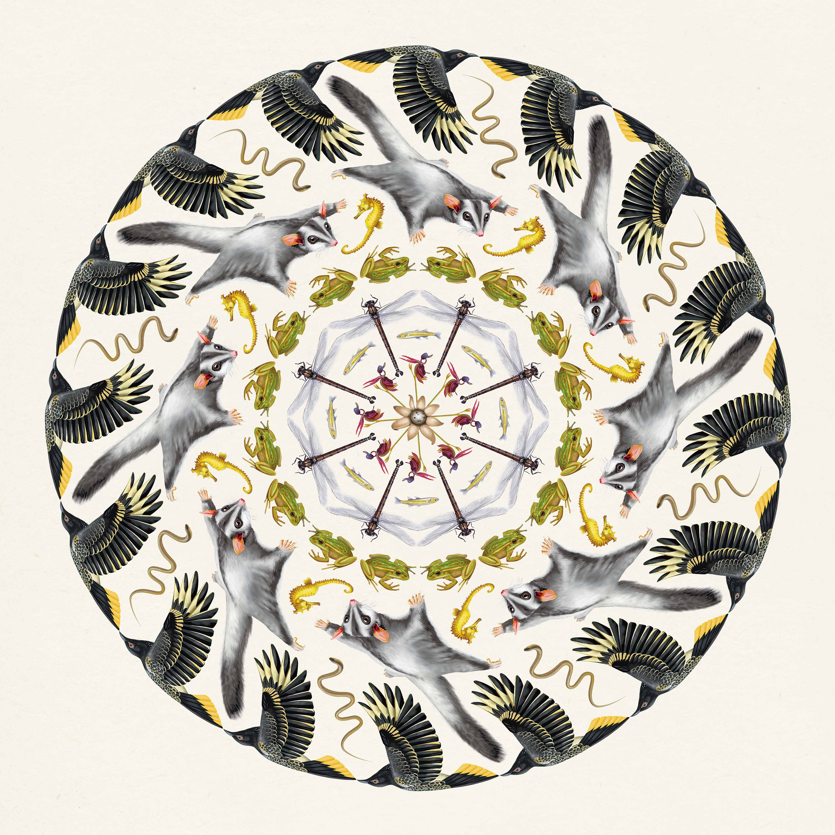 BIOMES Mandala - Featuring 9 stunning images of local biodiversity, 8 threatened, and one not yet threatened. Which is which? What is common today might be threatened tomorrow? How do we think about common species in the landscape. Created by Rachel Klyve