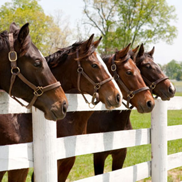 Extending the odds for racehorses