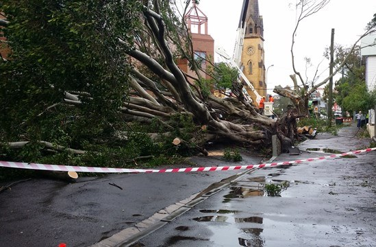 Tree down outside The Conservatorium