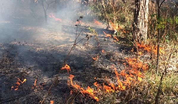 Cultural burn for land management