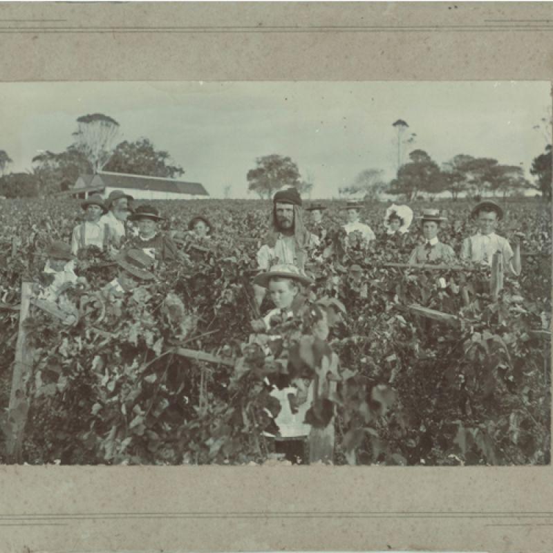 Douglas Vale - Vineyard