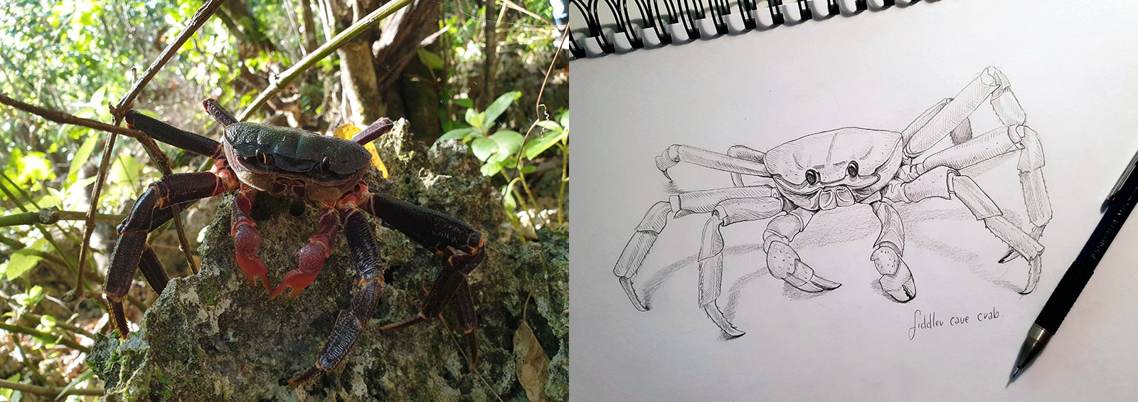 Nikki Pierce's photo of a crab and her sketch of the same critter