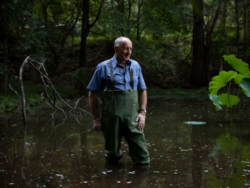 Professor Michael Mahony searching for frogs in the Cooranbong area.