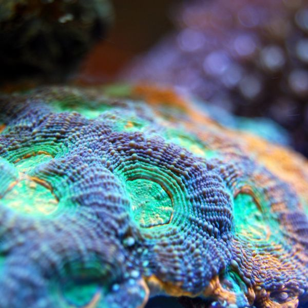 Coral Reef Acidification