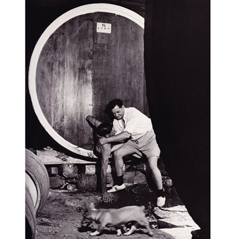 Max Dupain: Climbing out after cleaning the inside of a barrel, Mount Pleasant winery, 1950 Courtesy the National Library of Australia