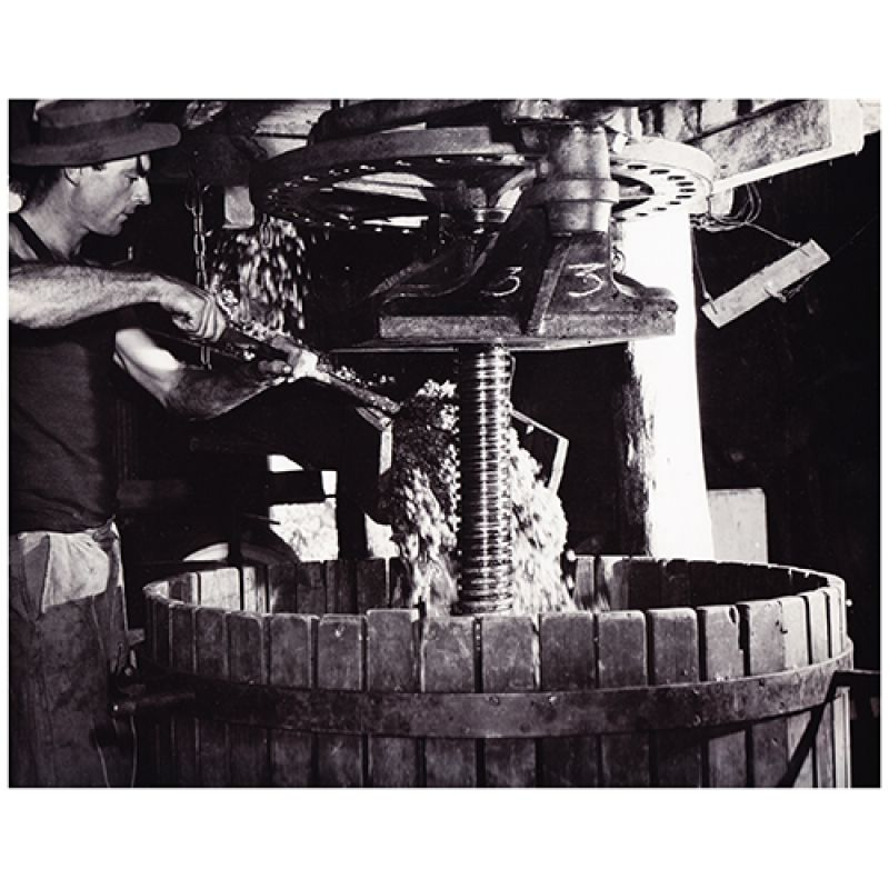 Max Dupain: Grapes pouring into the press, Mount Pleasant winery, 1950 Courtesy the National Library of Australia