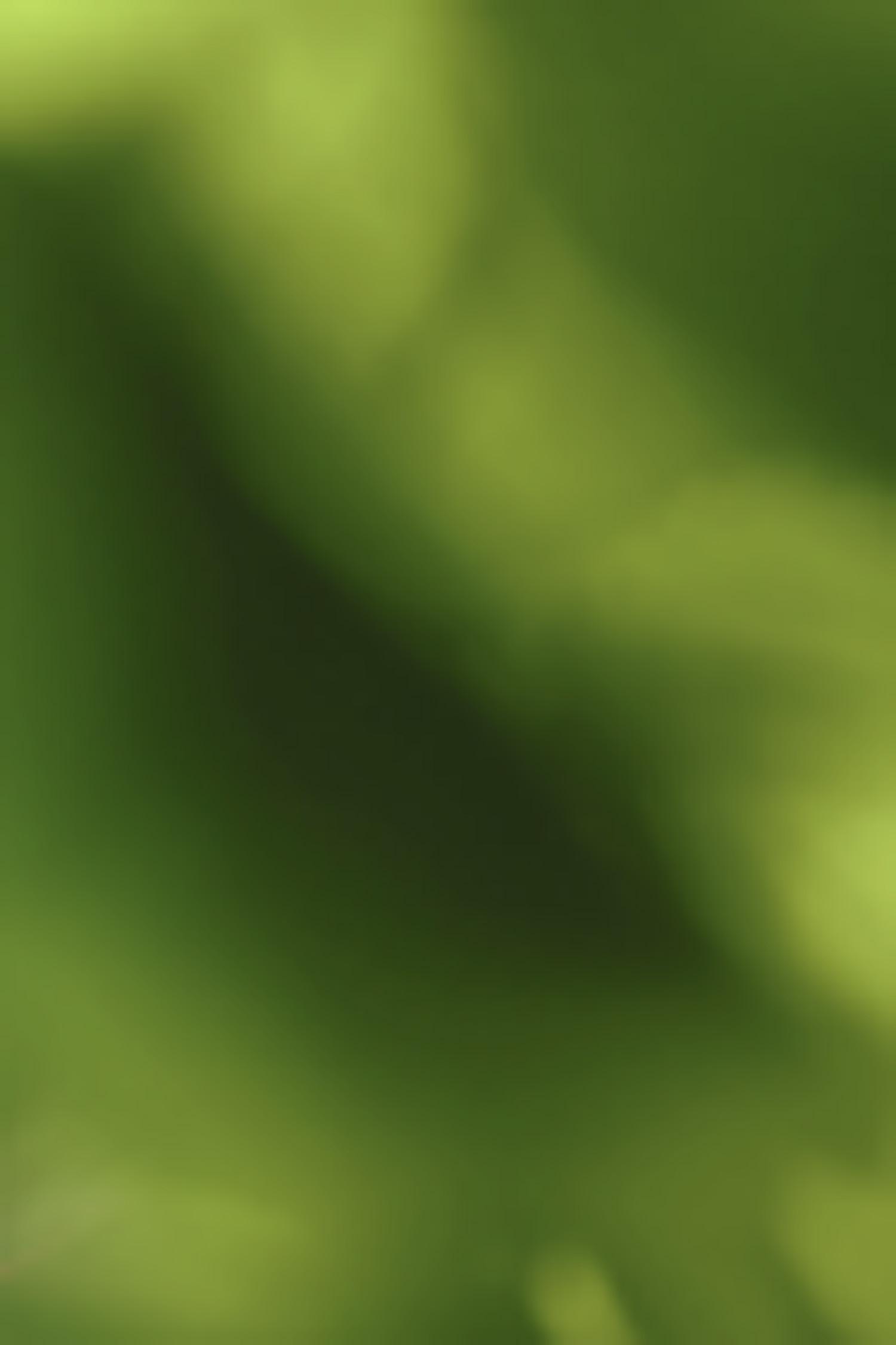 dawit-bekele