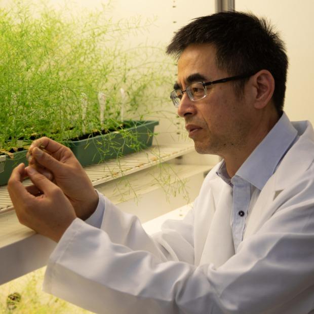Professor Yong-Ling Ruan looking at some plants