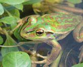 Amphibian Research Group