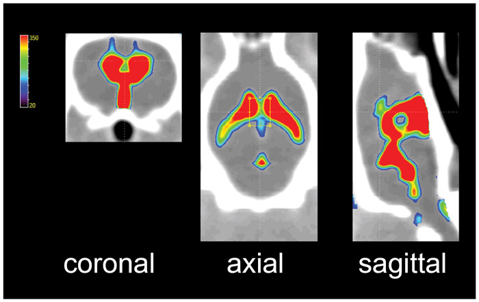 CONTRAST-ENHANCED CT IMAGES OF RAT CSF SYSTEM