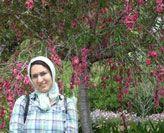 Nafisa Ghafournia