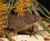 CRC Wildlife Biodiversity